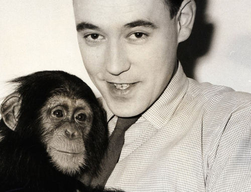 Congo the chimpanzee whose art was bought by Pablo Picasso are set to fetch £200,000 at auction