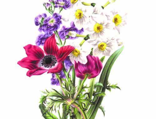 FLOWERS Flowers 1