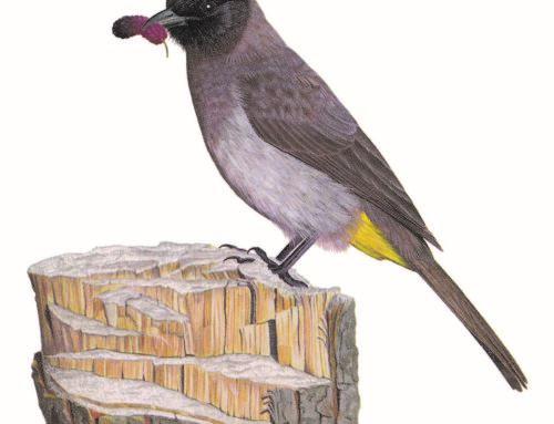 SA GARDEN BIRDS